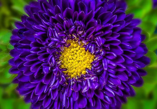 purpleflower_8413
