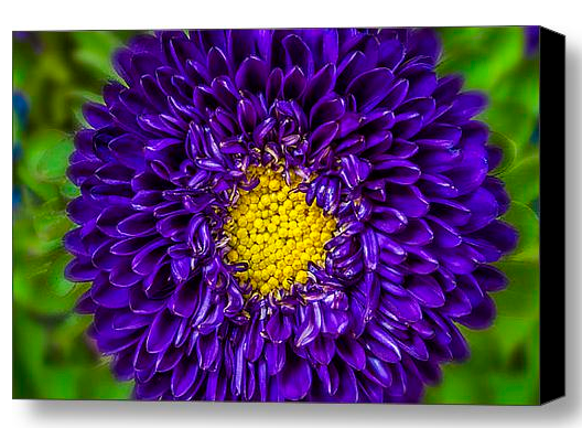 Canvas Flower Prints