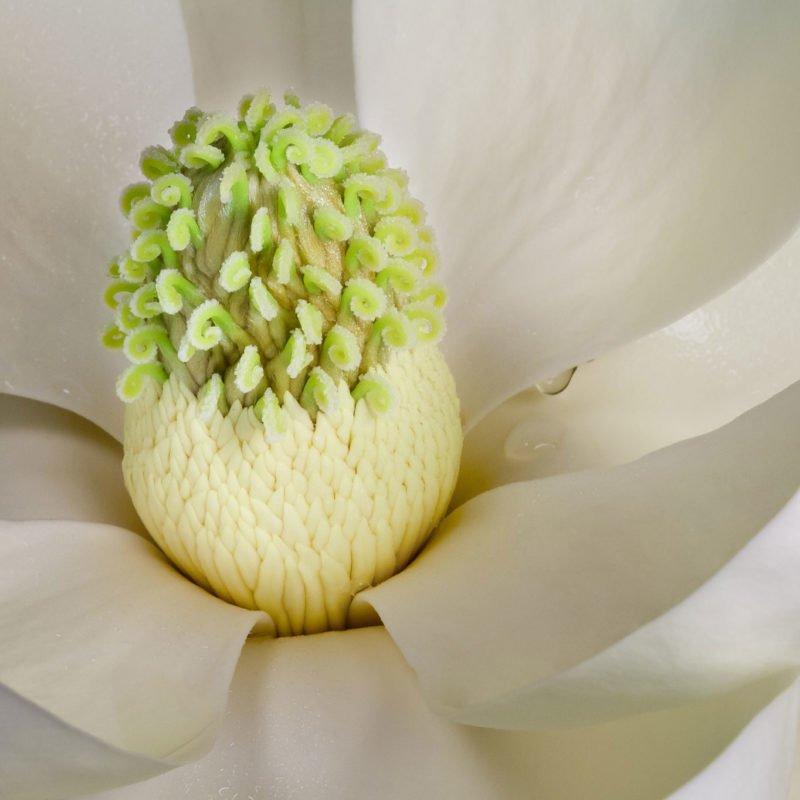 magnolia_0743