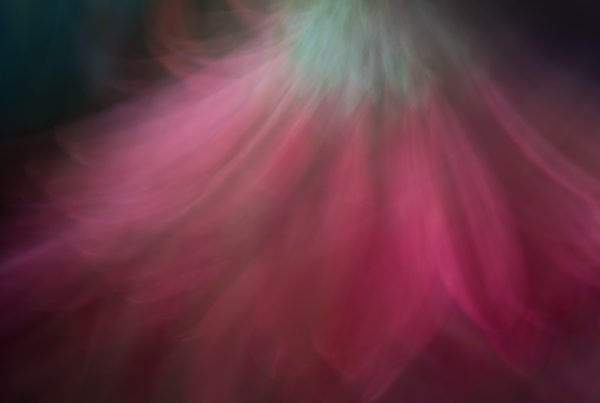 Macro Lens Painting -  Motion blur of a daisy.