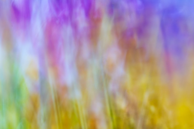 Macro lens painting of stems and flower tops.