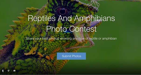 reptiles-amphibianscontest
