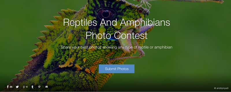 Reptiles and Amphibians Contest
