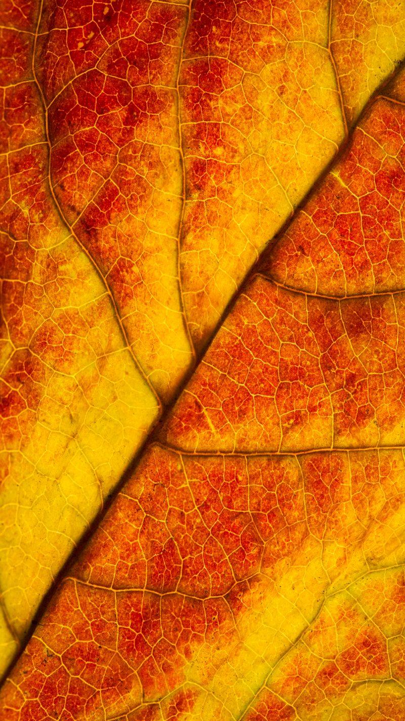leafstackvert