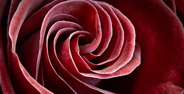 rose_20111022_1858