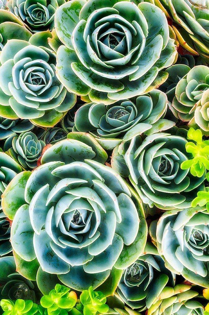 succulent-9263
