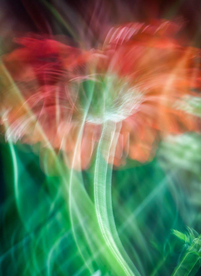 daisy macro lens painting