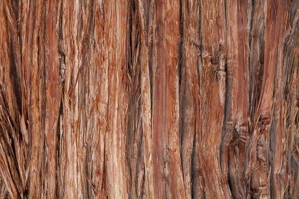Tree-Bark-Life-1687-2