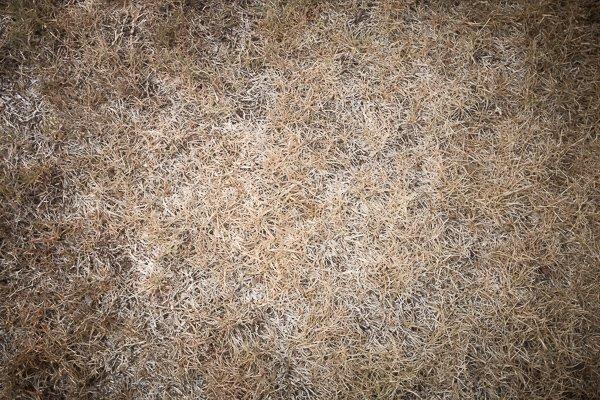 grassy-grass-3601-2