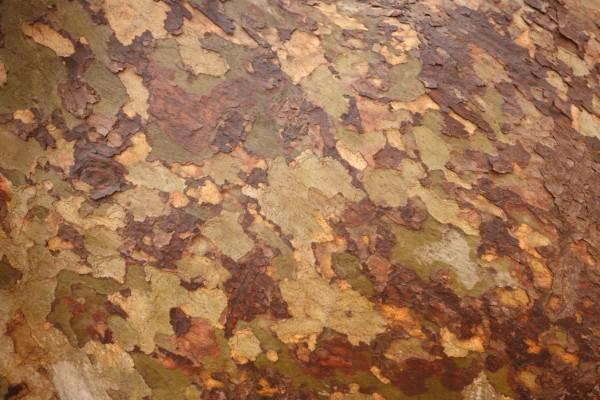 treeBark-texture-3731-2