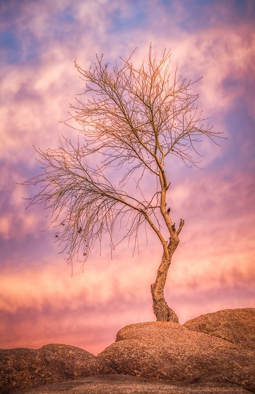 Tree on Watson Lake Arizona photographed after sunset.