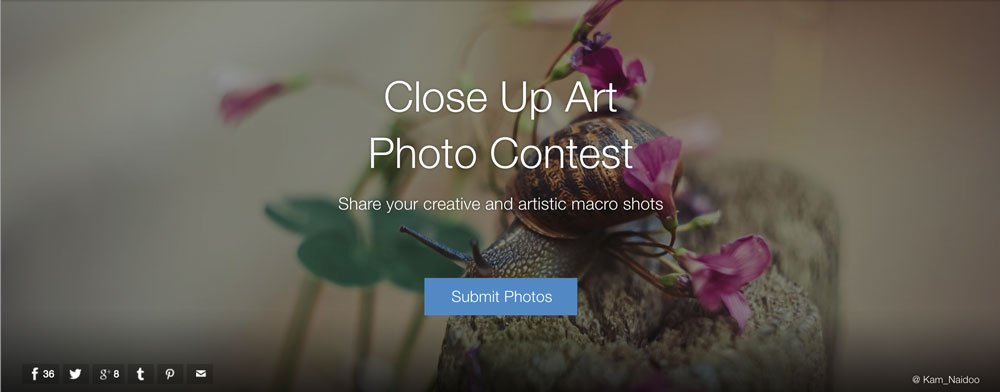 Close-Up Art Photo Contest