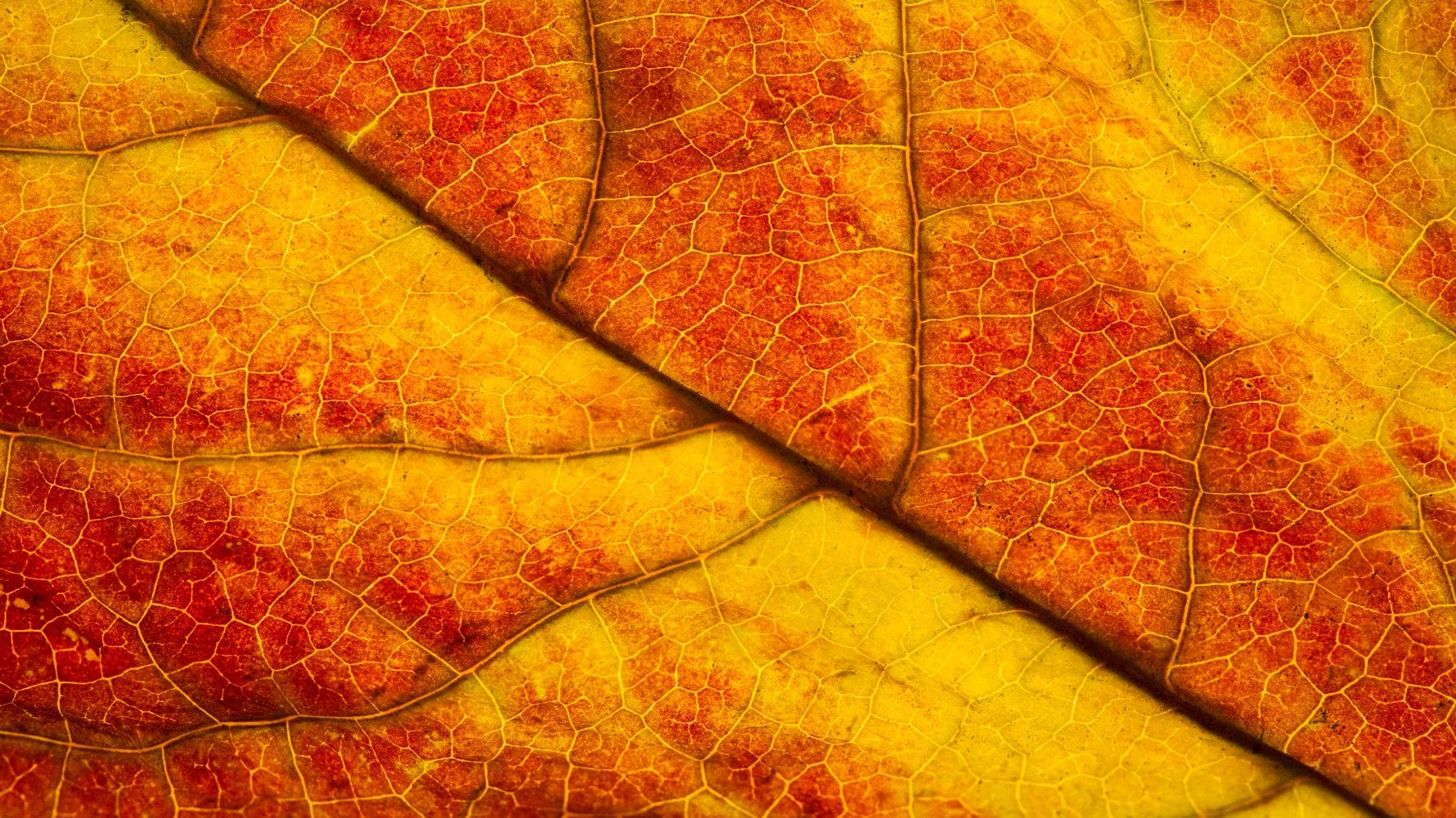 fall leaf,