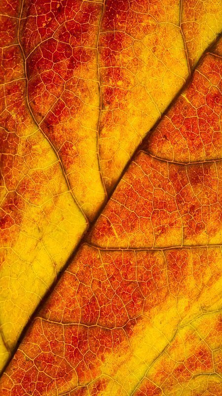 Fall Inspiration – Macro and Landscape Photographing