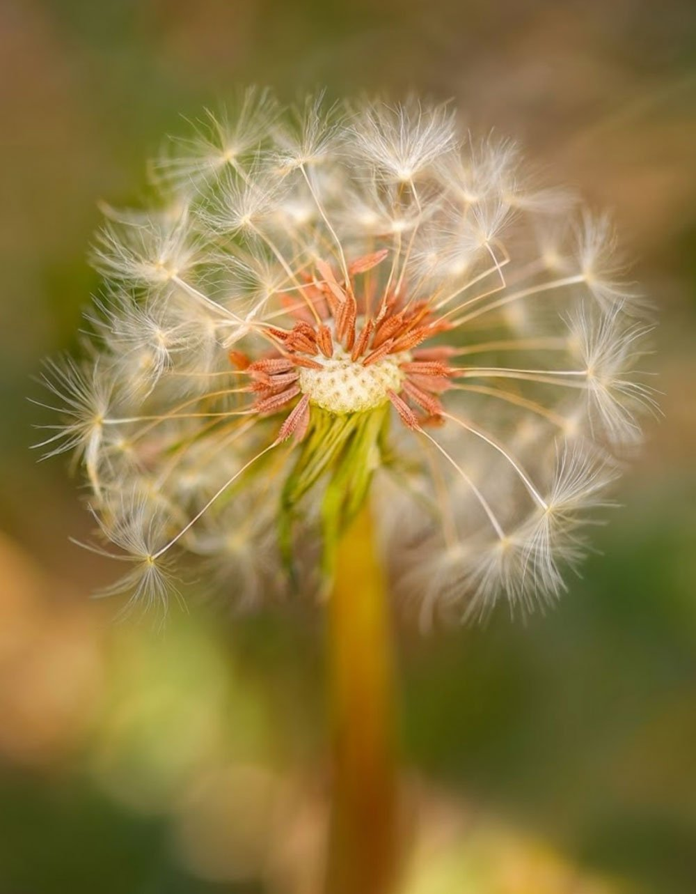 10 Tips to Find Inspiration for Macro Photographers