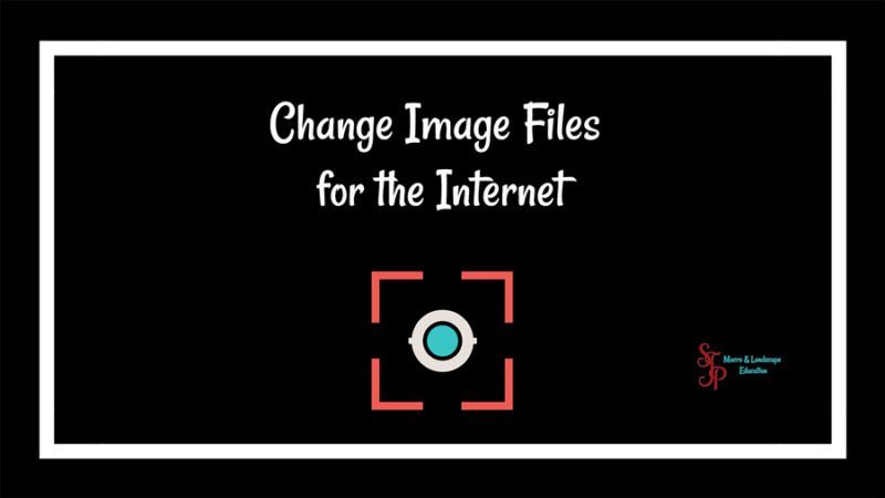 internet images, pictures for internet