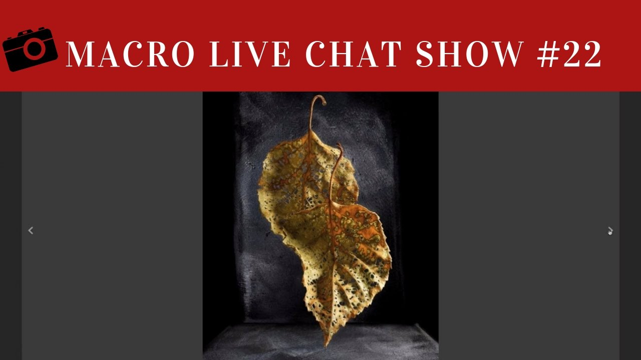 macro live chat show 22, harold ross