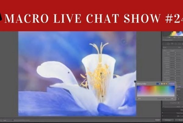macro live chat show, show 24
