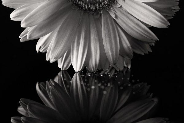 black and white shot on plexiglass