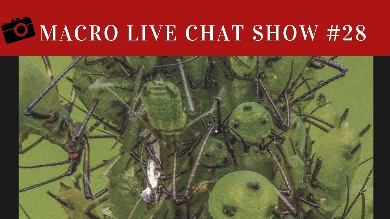 Macro Photography Live Chat #28 – Who Inspires you