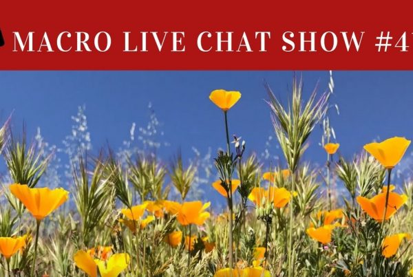 macro chat show spring