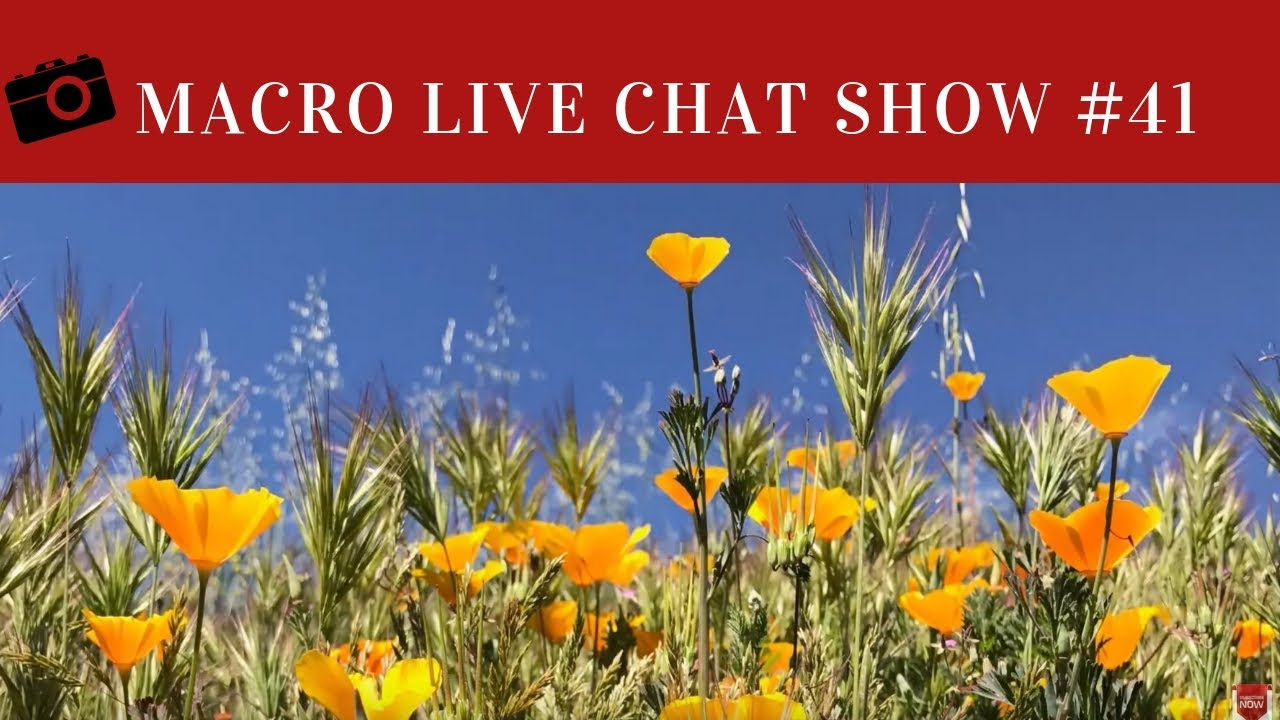Macro Photo Live Chat Show #41 – Spring Has Sprung