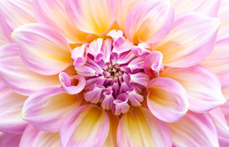 7 Easy Tips for Beautiful Soft-Focus Macro Photography