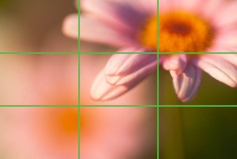 macro-composition-20
