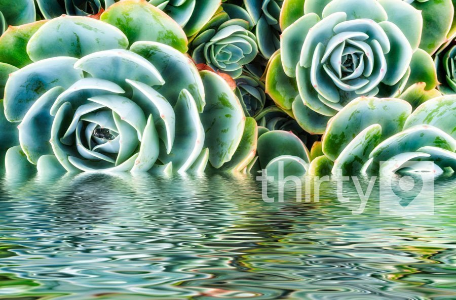Rippling Pools of Shades of Green – Life and a Succulent