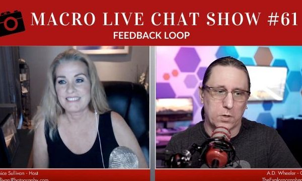 macro live chat show feedback loop