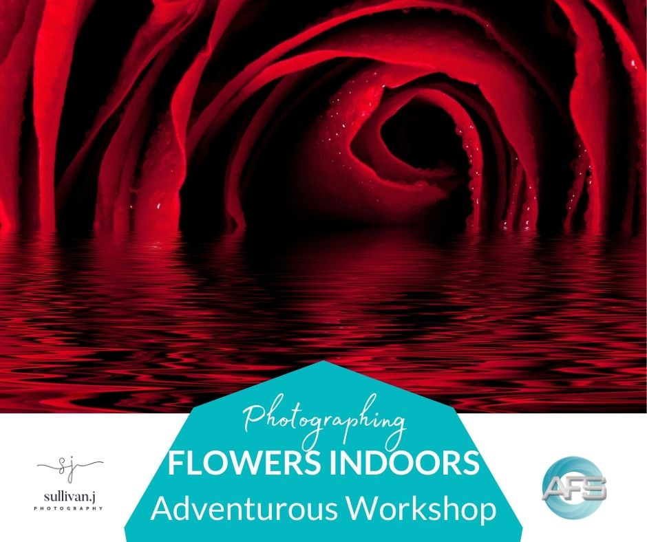 photographing flowers indoors workshop