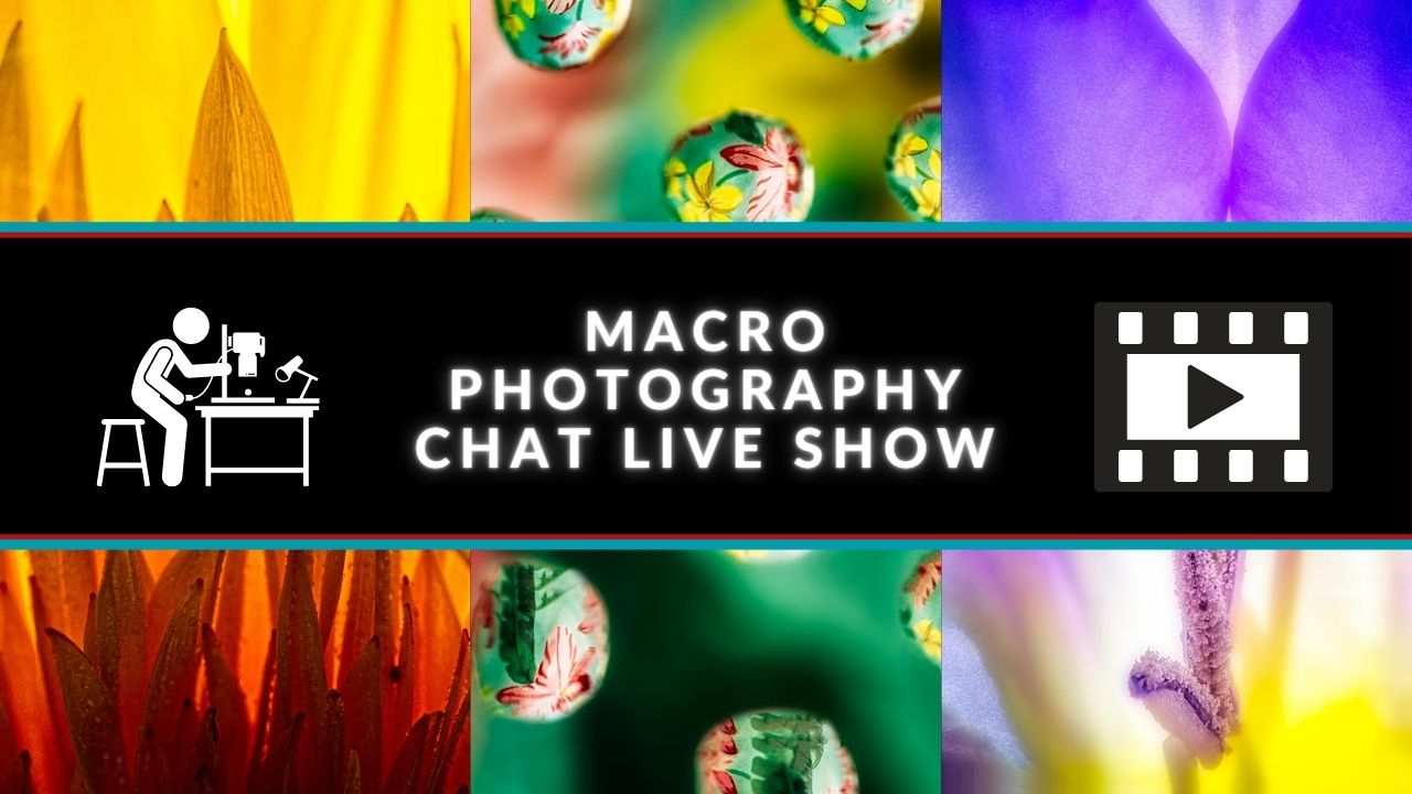 macro chat live show