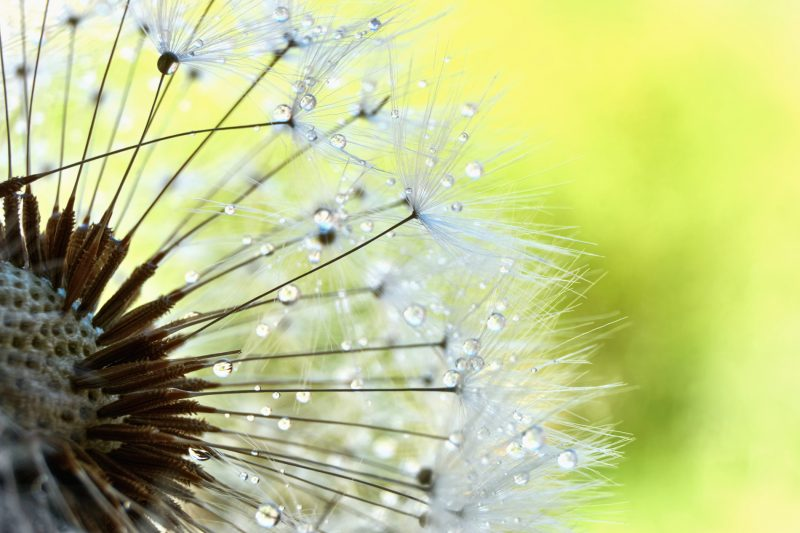 Six Tips to Help Improve Your Macro Photography Game